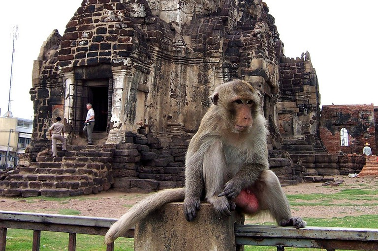 Hanging Out in Lopburi Courtesy of Ryan Harvey/Flickr