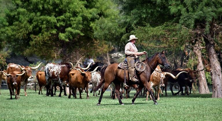 Texas Horse & Cattle Drive