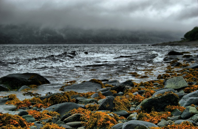 Seaweed On Bute | © Red Rose Exile/Flickr