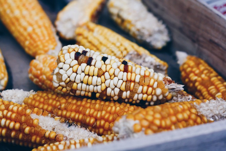 Corn | Public Domain/Pixabay