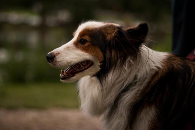 Dog | © Trinity Kubassek/StockSnap