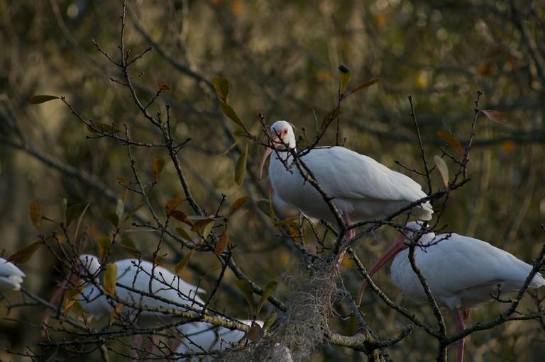 Birds at City Park's Birding Corridor, courtesy of Rebeca Trejo