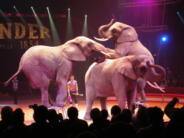 Elephants at the Cirque Pinder │