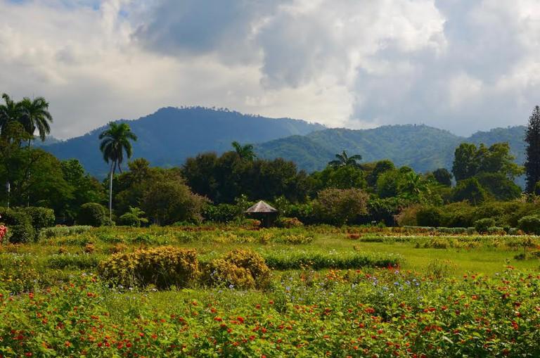 Hope Botanical Gardens, Kingston, Jamaica.  © Caribbean Cables