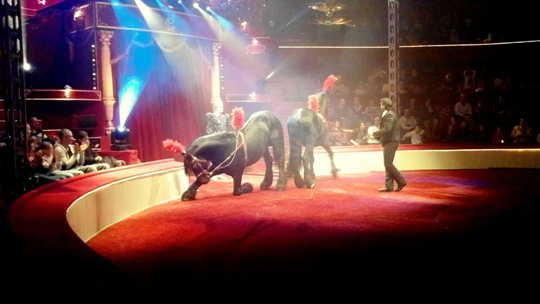 Horses and performer at the Cirque d'Hiver, Paris │