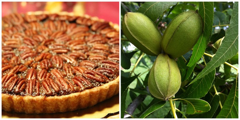 Pecan Pie © @joefoodie/Flickr, Texas Pecans © Urban Forestry/Flickr