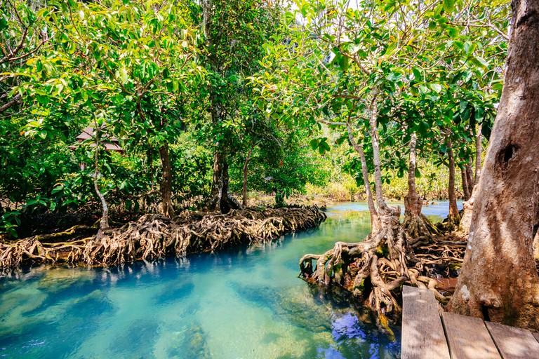 Pa Phru Tha Pom Khlong Song Nam at Kra-bi province,Thailand