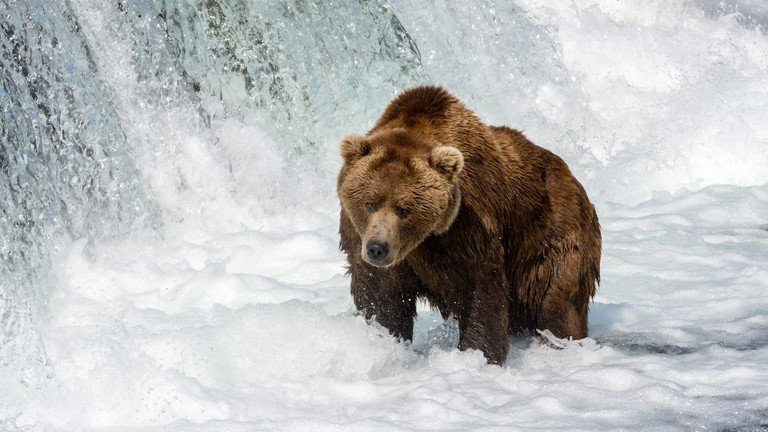 Brown Bear at Brook Falls | © Christoph Strässler/Flickr