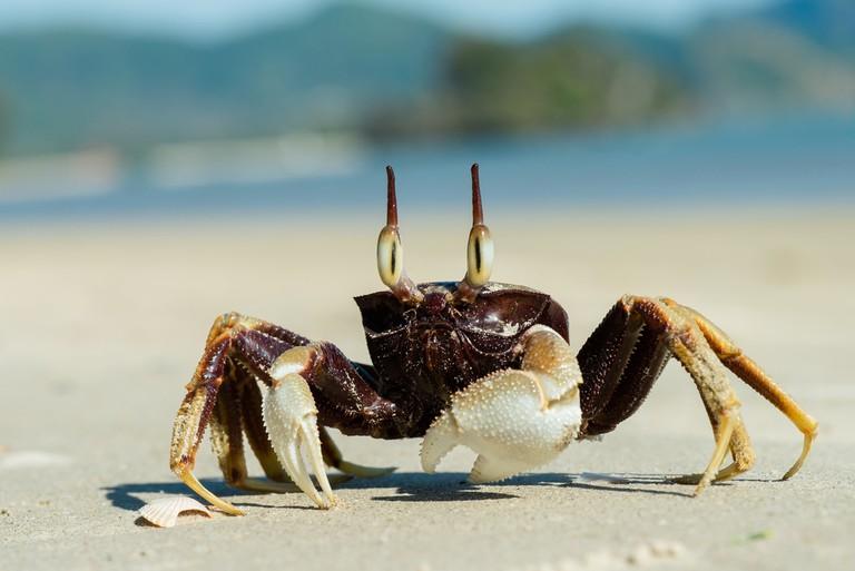 A crab |© Rushen/Flickr