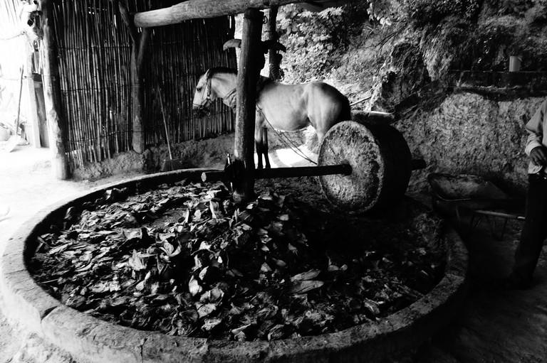 Mezcal distillery | © Giulian Frisoni/Flickr