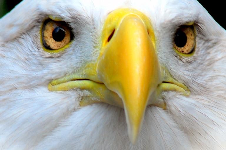 Eagle's beak | © Pen Waggener/Flickr