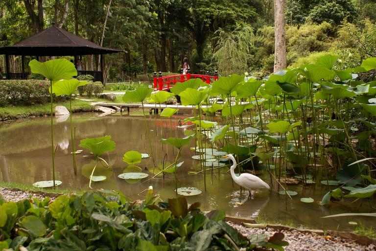 The Botanical Gardens in Rio de Janeiro |© Ricardo Zerrener|Riotur/Flickr