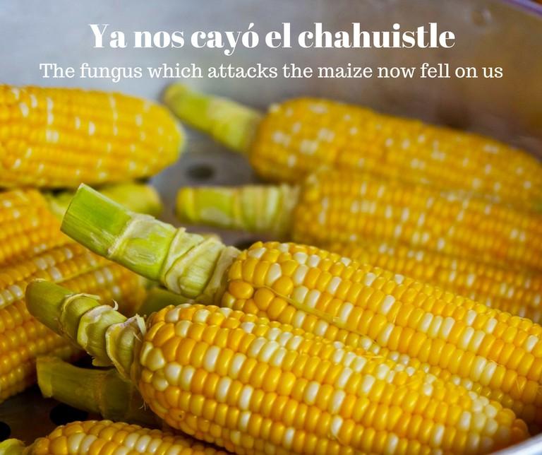 Corn | © Pixabay