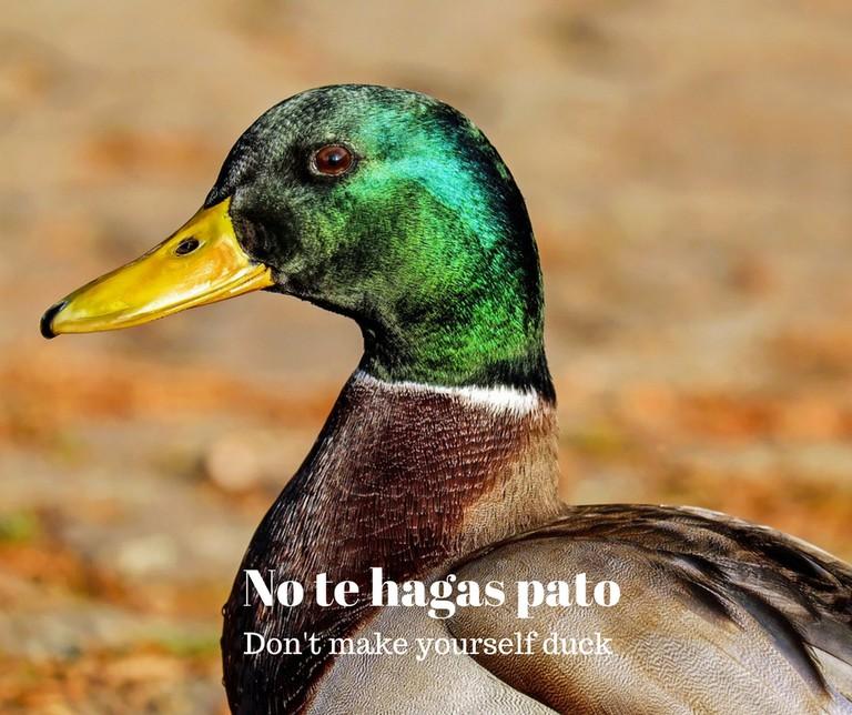 Duck | © Pixabay