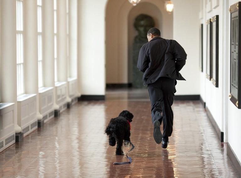Barack Obama and Bo running / Pixabay