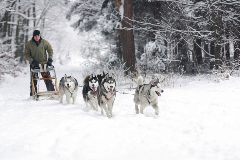 Dog sledding | Public Domain/Pixabay