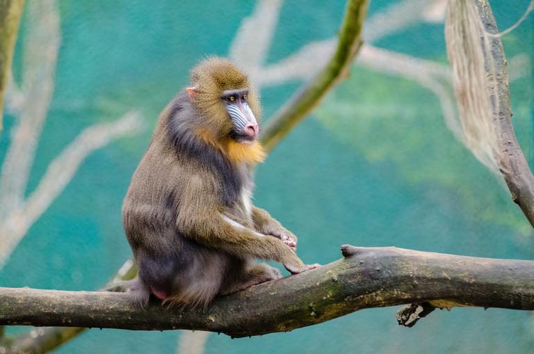 Monkey on a branch |public domain/pexels