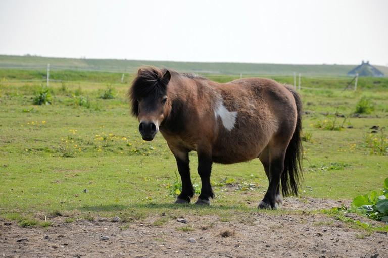 Little pony | public domain pictures