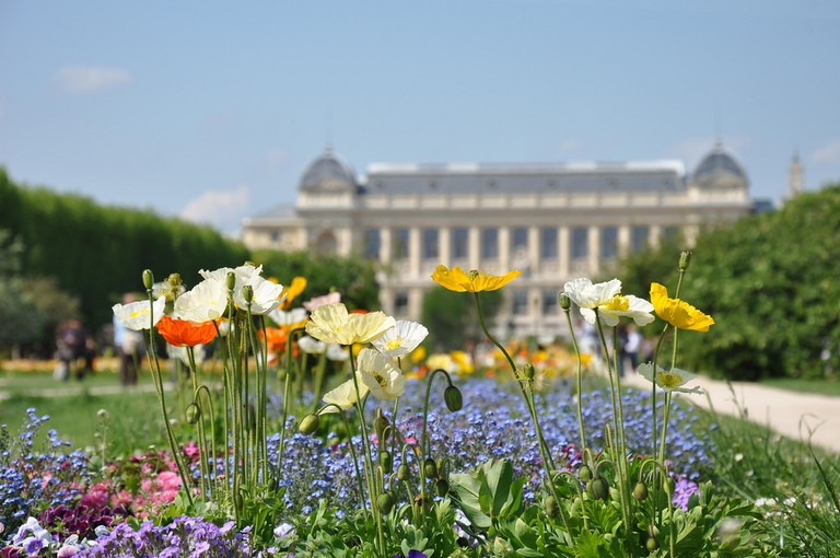 Summer flowers in the Jardin des Plantes │© Céline