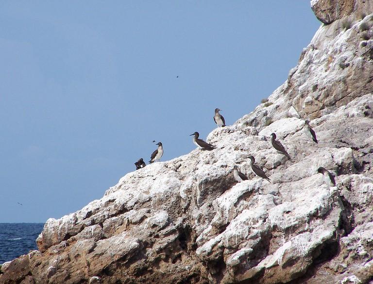 Seabirds on Islas Marietas | © Mark Tyra/WikiCommons