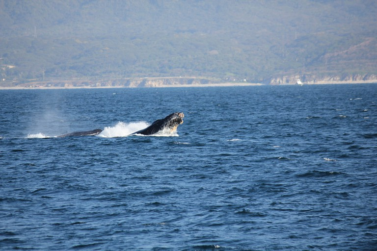Humpback whales near the Islas Marietas | © Terri Bateman/Flickr