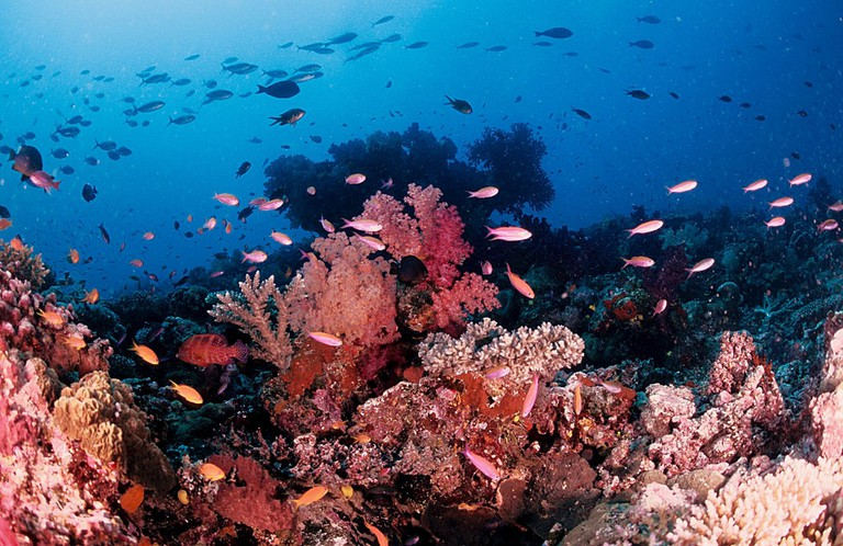 Soft Coral off Taveuni | © Tony Shih / Flickr
