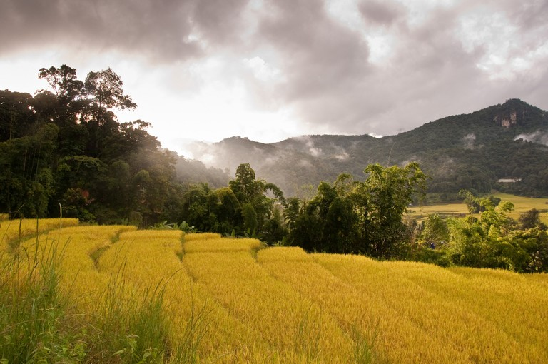 Rice paddies near Chiang Mai in Northern Thailand