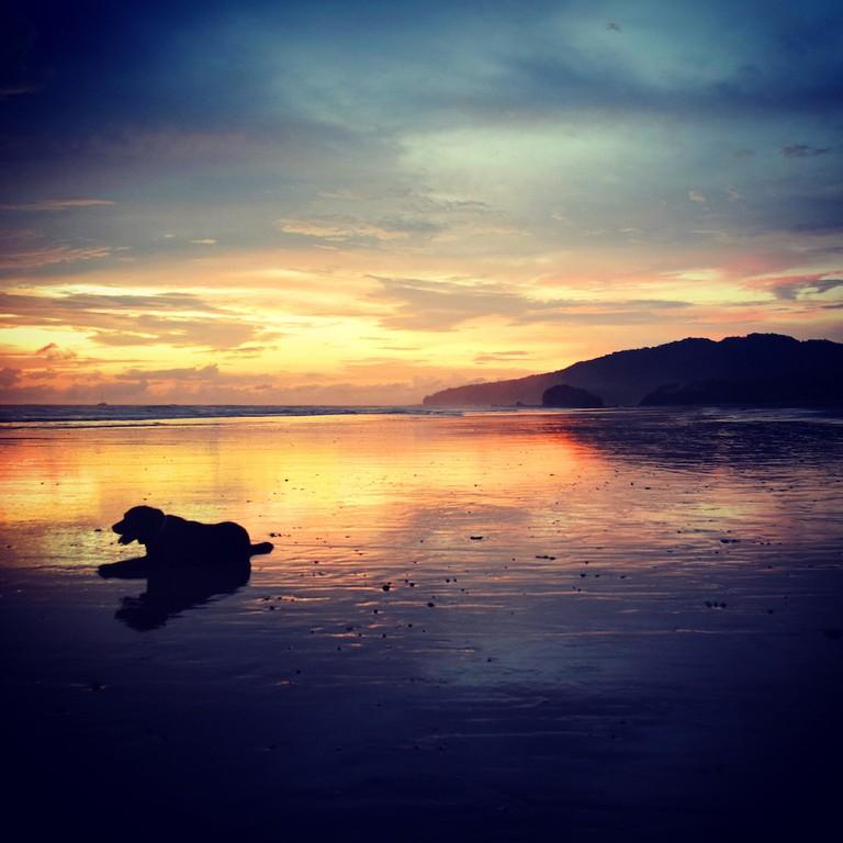 Dog-friendly sunsets/Jenn Parker/@CRJenn86
