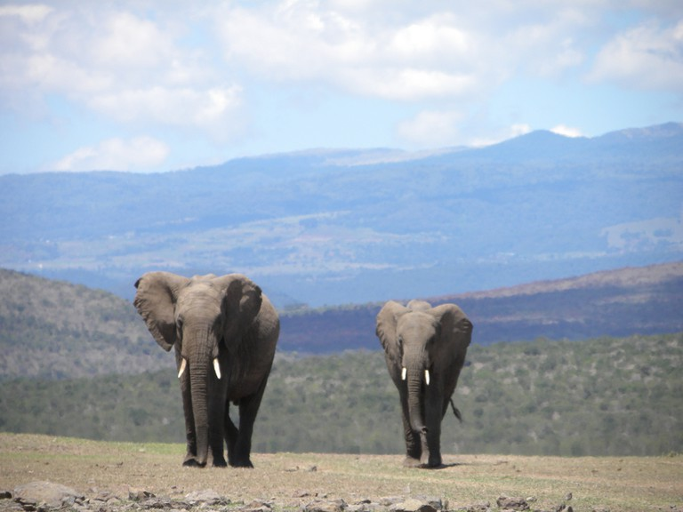 Elephants in front of the Aberdares Maasai Mara National Reserve, Kenya