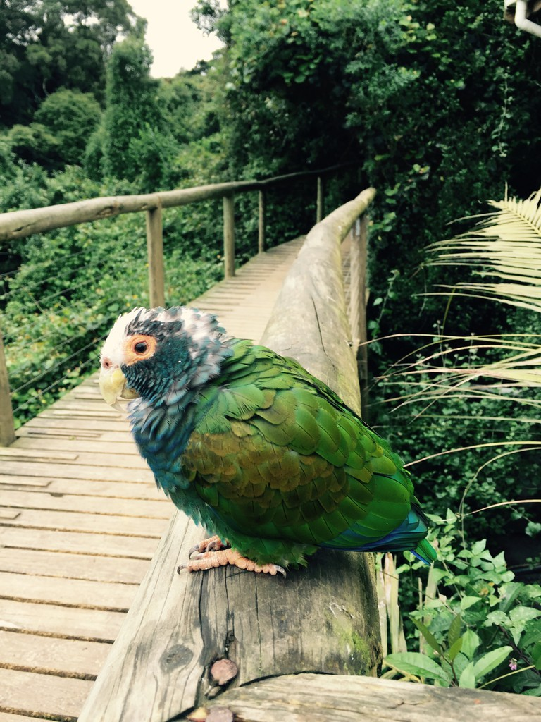 One of the local residents at Birds of Eden