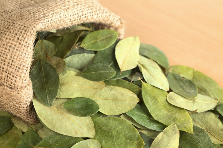 Dried coca leaves