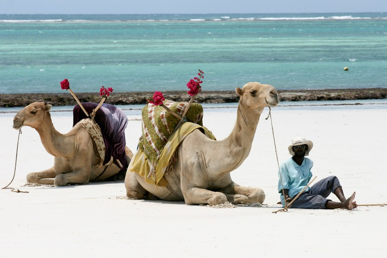 Camels and its guide at Diani beach | © Giorgio Montersino/ Flickr
