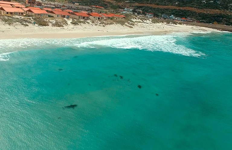 A copper shark is spotted by a drone in False Bay, Cape Town