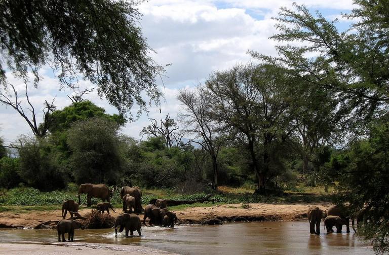 Elephants bathing at Ewaso Nyiro river in Samburu National Reserve | © Franco Pecchio/ Flickr