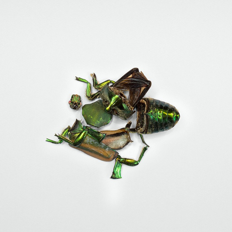 Escarabajo © Alejandro Olávarri