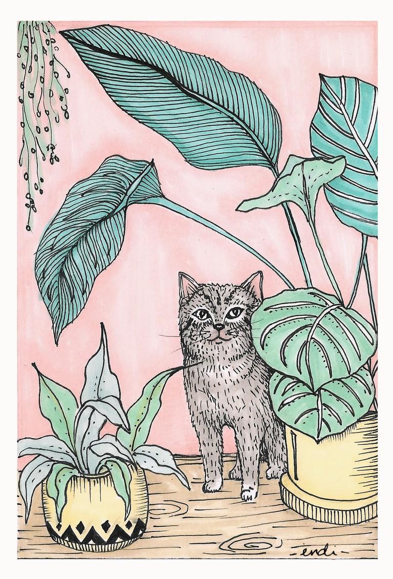 Gato Plantas © Indi Maverick