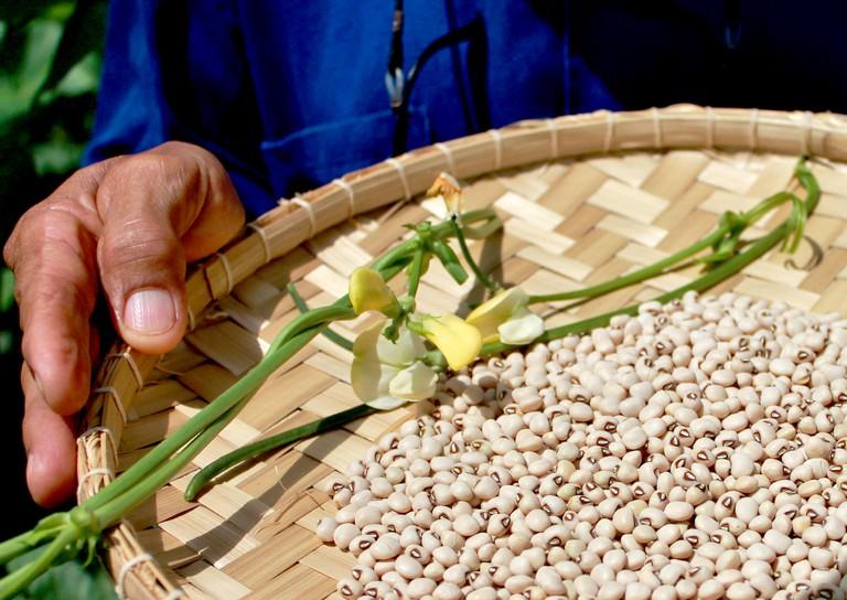 Cowpea beans used to make waakye