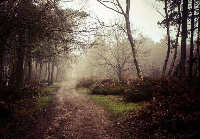 Lickey Hills walking trail