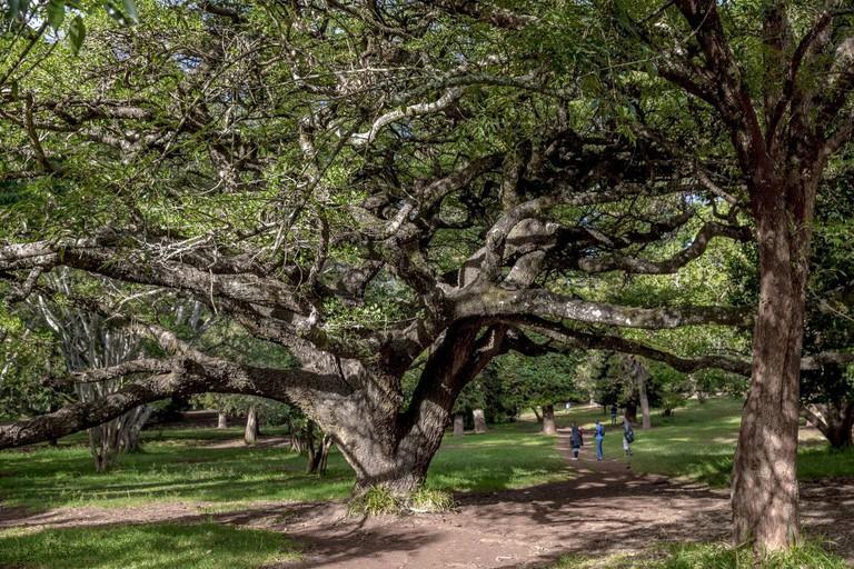 Nairobi Arboretum | © Ninara/ Flickr