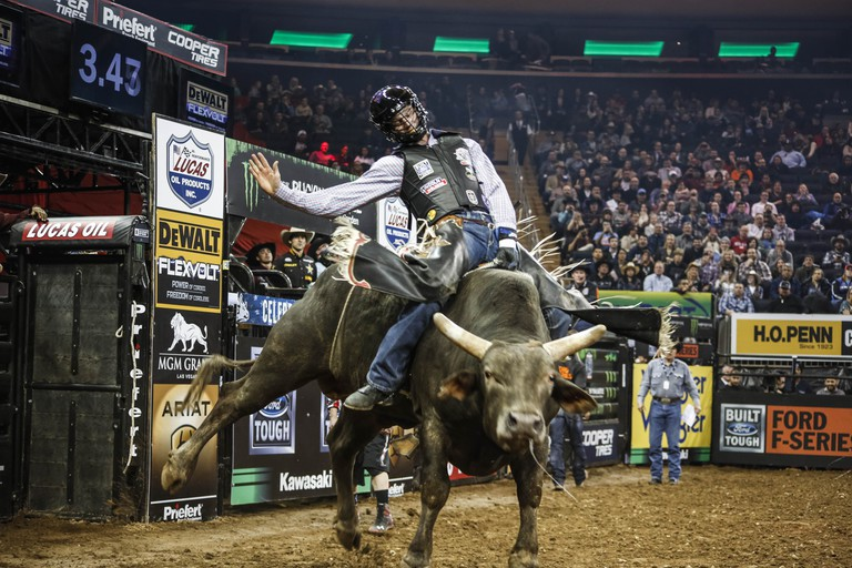 Professional bull riding at Madison Square Garden in New York City | © Amanda Suarez/Culture Trip