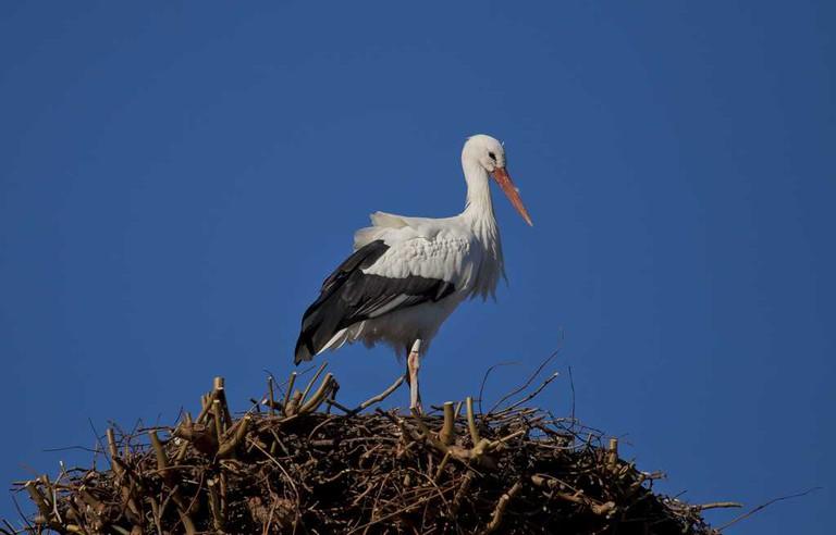 Stork in Orangerie Park