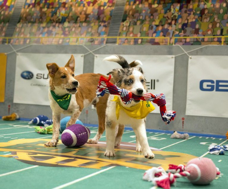 Puppy Bowl | © Discovery Communications
