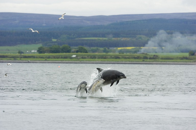 Dolphin and Young, Chanonry Point