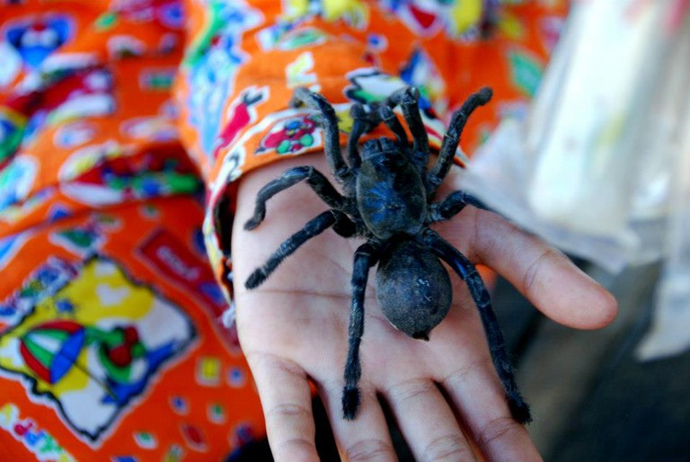 A child handles a live tarantula at a stall in Skuon | © Marissa Carruthers