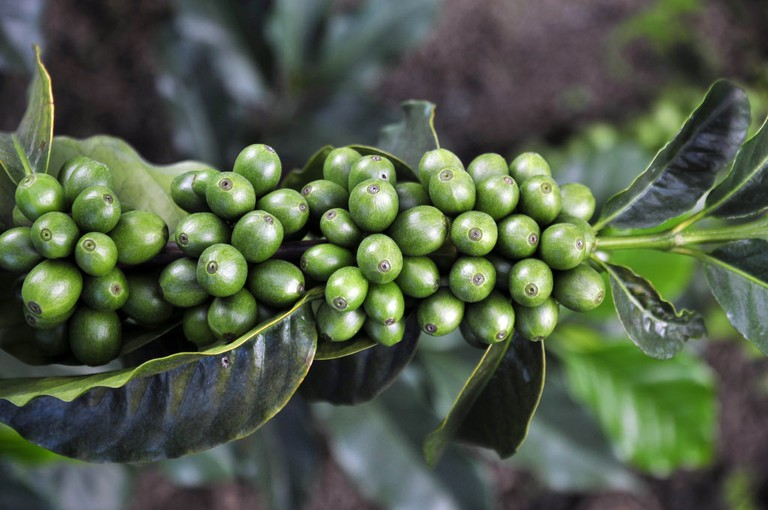 Colombia is famous for its coffee
