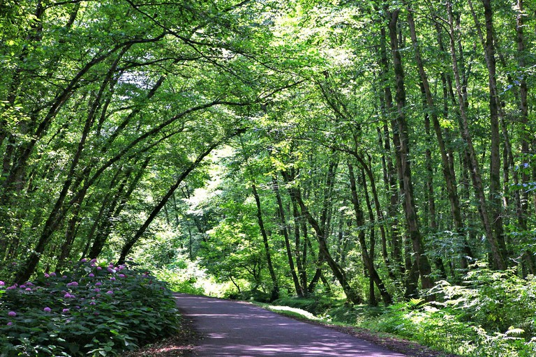 Gisum Forest in the northern Gilan province