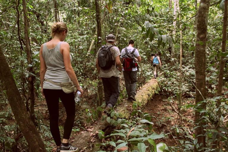 A madidi jungle path