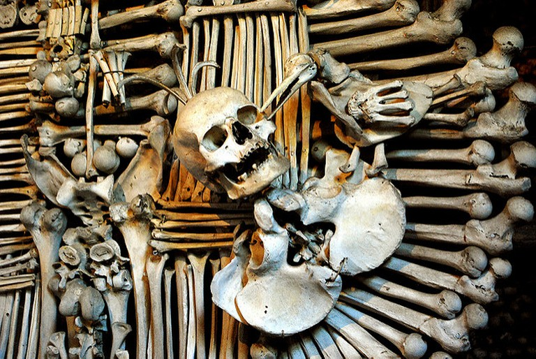 Bones are arranged into works of art