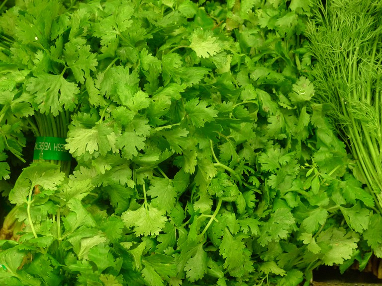 Coriander is a common South African ingredient for stews, curries and garnishes