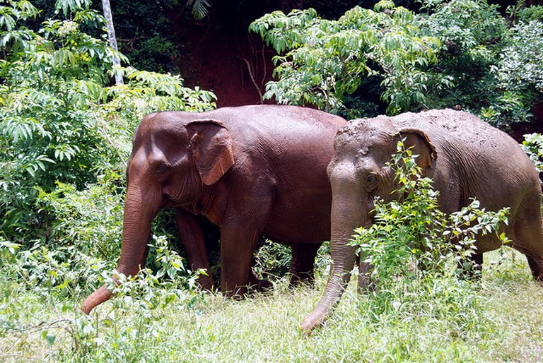 Elephants roam the jungle in Mondulkiri